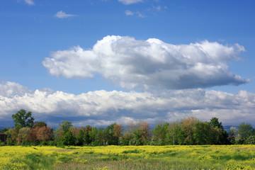 paesaggio in stagione primaverile con cielo azzurro