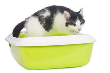 Schwarz weißes Kätzchen im Katzenklo