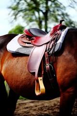 Pferdesattel auf Großpferd