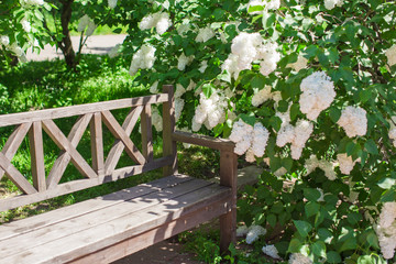 Beautiful beautiful flower lilac garden and wooden bench