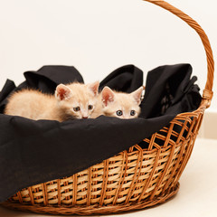 two little lovely cat in wicker basket