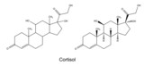 Structural chemical formulas of cortisol