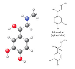 Structural chemical formulas and model of adrenaline