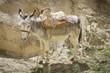 Obrazy na płótnie, fototapety, zdjęcia, fotoobrazy drukowane : Donkey
