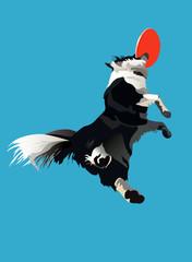 dog-frisbee1