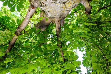 Auszeit: Entspannung unter altern Kastanienbaum :)