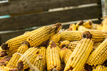 Ears of dried corn or maize
