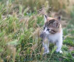 small fluffy kitten in the grass