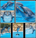 Collage of photos of dolphins in a show