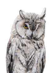 light gray owl on white background