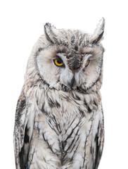 light gray owl on white background