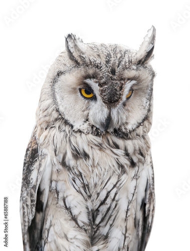 light gray owl on white background - 65887188
