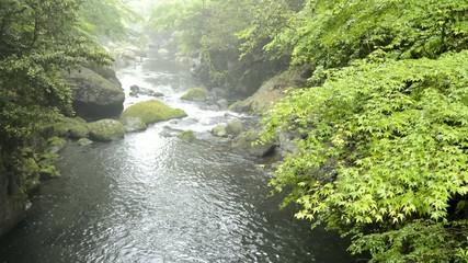 カエデと菊池渓谷の清流