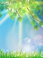 Eco background - green leaves, grass, bright sun.