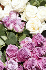 Bouquets of white and pink roses