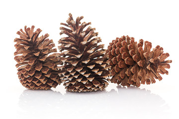Dry pine cones on white background