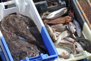 arrivage de poissons au port de pêche