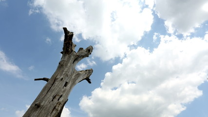 Time lapse of clouds rolling above a dead tree