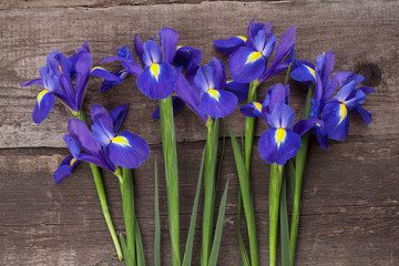 Blueflag or iris flower on grungy wooden background