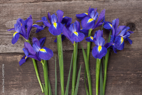 Foto op Canvas Iris Blueflag or iris flower on grungy wooden background
