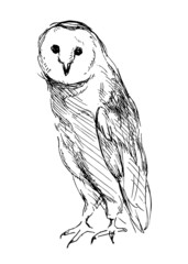 Barn Owl. Hand drawing. Vector illustration