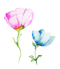 Watercolor with Pink and Blue flower