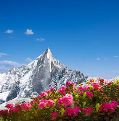Alpenrosen mit Berg