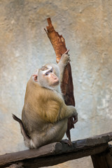 Monkey in action