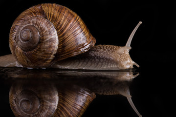 snail on a black background