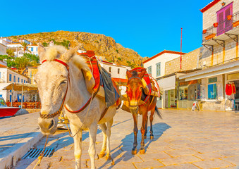 mules waiting for turists in the port of Hydra island in Greece
