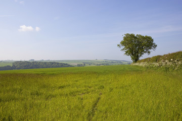 yorkshire wolds scenery