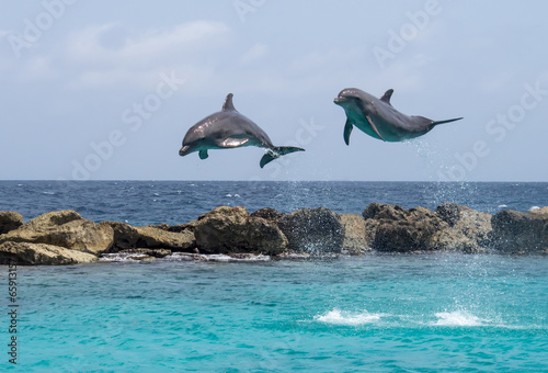 Dolphins - 65913157