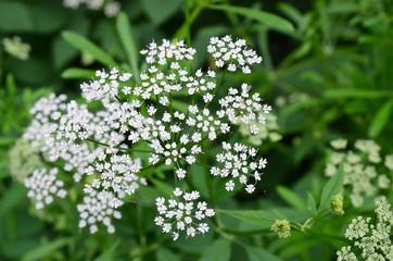 Winzige Blüten Wildblumen
