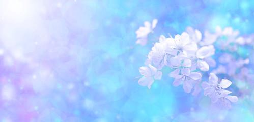 Sunshine and Blue Blossom Banner