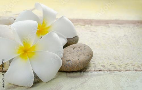 white and yellow frangipani flower © tomgigabite