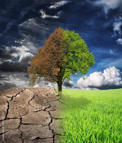 Spoed canvasdoek 2cm dik Droogte Ecology landscape