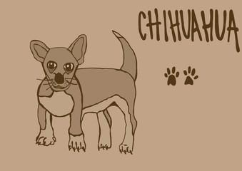 Chihuahua vintage