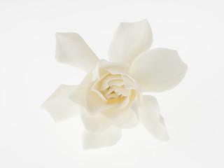 梔子の花のクローズアップ