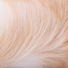 textured dog hair background, Animal fur