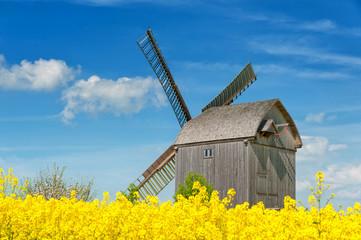 Windmühle bei Storkow umgeben von blühendem Raps