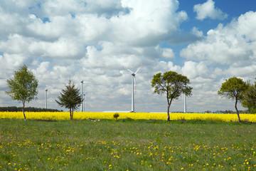 Tree and wind turbine in rapeseed field
