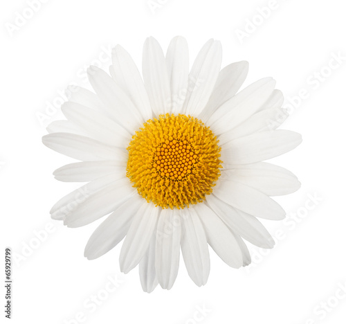 Foto op Aluminium Madeliefjes White daisy