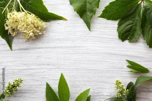 canvas print picture Hintergrund mit Blaettern