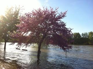 река Луара вышла из берегов. Тур. Франция.
