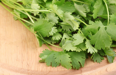 fresh coriander or cilantro on wooden board isolated on white