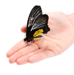 Beautiful butterfly on hand, isolated on white
