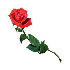 rose scarlet