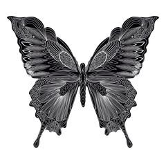 Black butterfly.