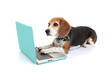 business concept pet dog using laptop computer - 65939756