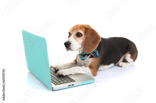 Foto Spatwand Hond business concept pet dog using laptop computer